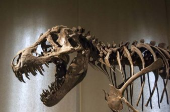 Adobe Flash is a dinosaur -- it used to rule the web, but now it's only found in fossils.